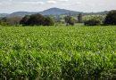 Ministério alerta o sobre recebimento de pacotes de sementes não solicitadas<BR><BR>