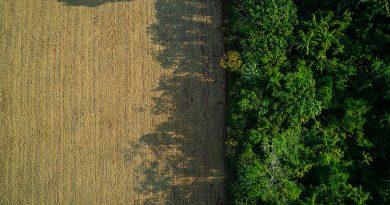 Desmatamento da Amazônia tem 3ª maior alta percentual da história<BR><BR>