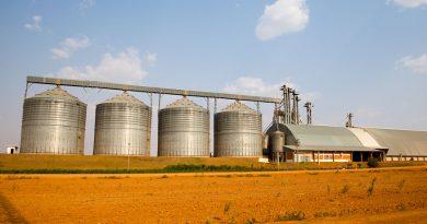 Soja lidera valor de produção na agricultura com R$ 104 bi<BR><BR>