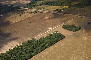 Desmatamento na Amazônia foi de 9.762 km2 e é maior número desde 2008<BR><BR>