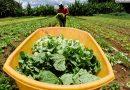 Demanda crescente estimula a produção orgânica no Brasil e no mundo<BR><BR>
