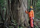 Florestas entram em lista de concessões à iniciativa privada<BR><BR>