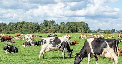 Em mercado atípico, leite registra redução de oferta e cotações aquecidas no Paraná<BR><BR>