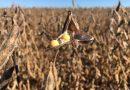 Governo zera imposto de importação da soja e do milho<BR><BR<