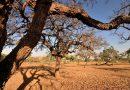 Agência Nacional de Águas publica relatório de secas<BR><BR>