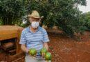 Abacate conquista o lugar do café no Norte do Paraná<BR><BR>