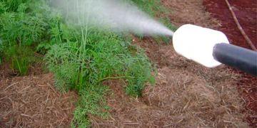 Aprovações de agrotóxicos no governo beneficiam empresas estrangeiras<BR><BR>