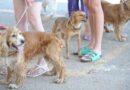 Rússia produz primeiro lote de vacina contra covid-19 para animais<BR><BR>
