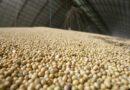 Preço dos principais produtos agropecuários sobe no primeiro trimestre<BR><BR>